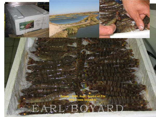 Crevettes emballées marais